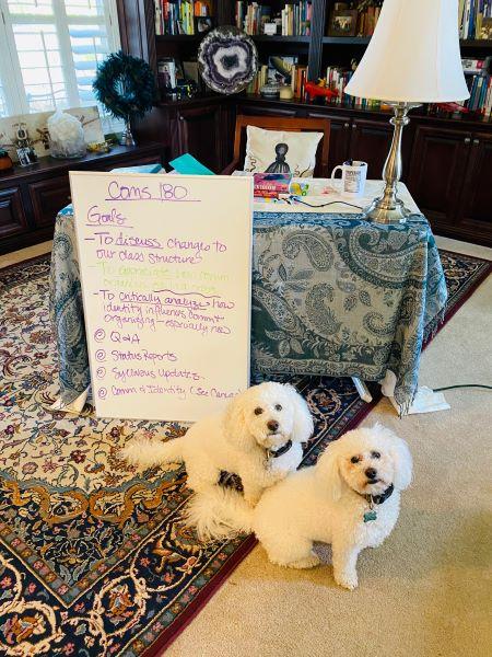 Virtual classroom with doggie TAs